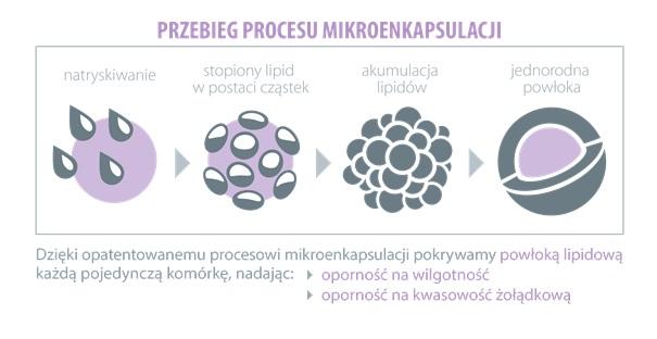 Aliness probiotyki mikroenkapsulacja